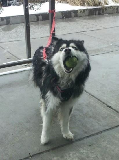 speakabledog (17)