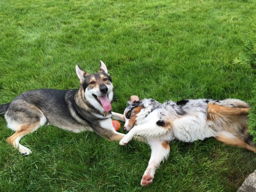 speakabledog (2)