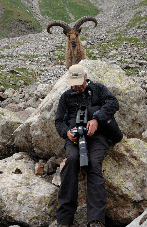cameraman_animal (12)
