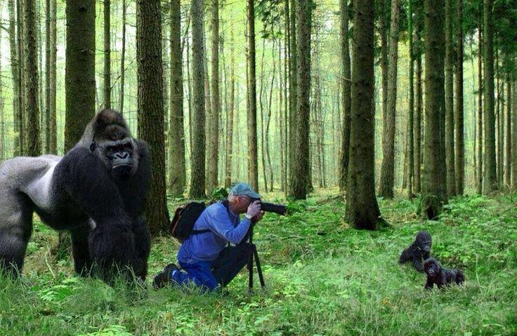 cameraman_animal (8)