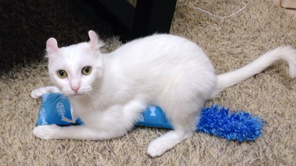 sofa_cat2