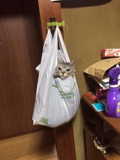 cat_escape2