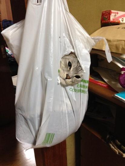 cat_escape5