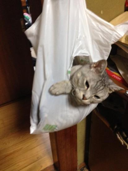 cat_escape8