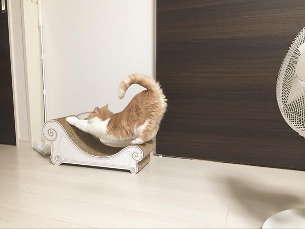 cat_petreason (12)