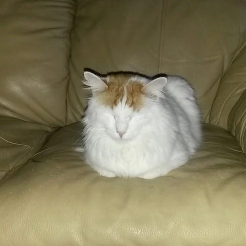 cat_petreason (16)
