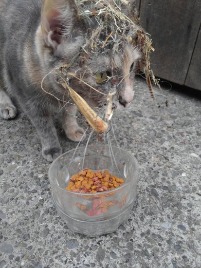 cat_petreason (4)