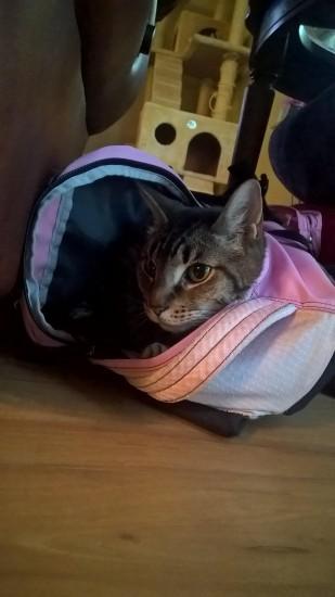 cat_petreason (8)