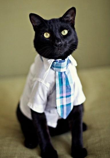 cat_tye