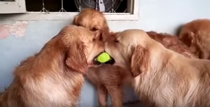 dogball_three1