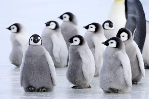 カメラ目線ペンギン