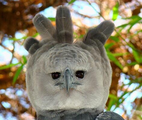 partybird1