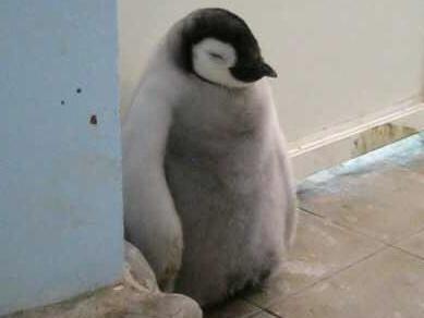 立つペンギン