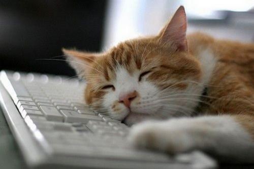 sleep_cat