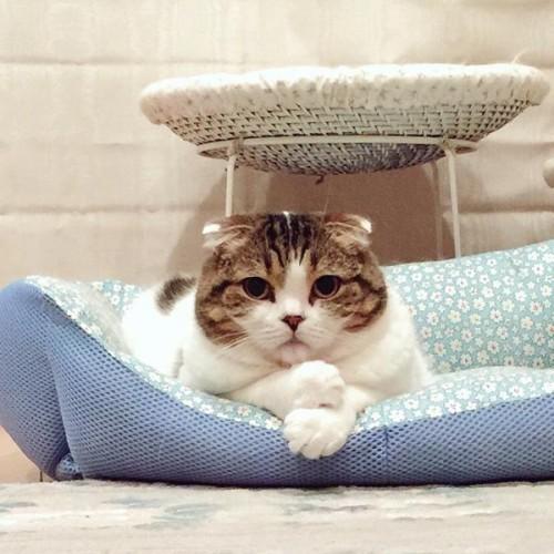 cat_donguri (1)