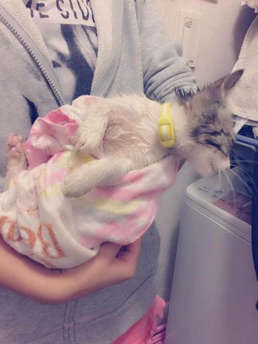 kinugawa_animal (4)