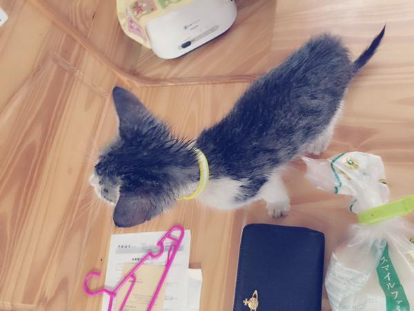 kinugawa_animal (5)