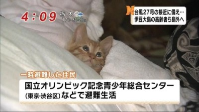 kinugawa_cat