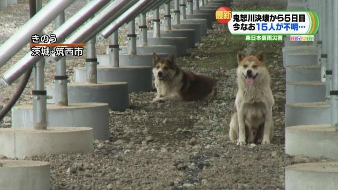 kinugawa_dogs4