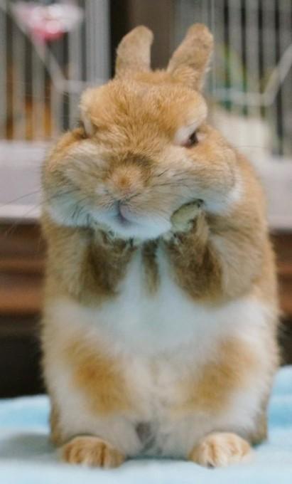 rabbit_facelift (2)