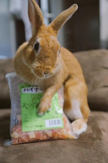 rabbit_facelift (4)