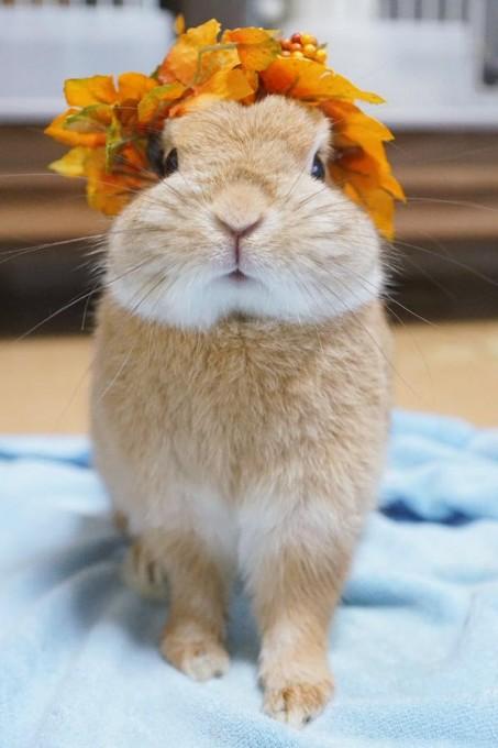 rabbit_facelift (5)