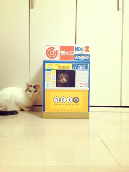 1026cat_takarakuji7