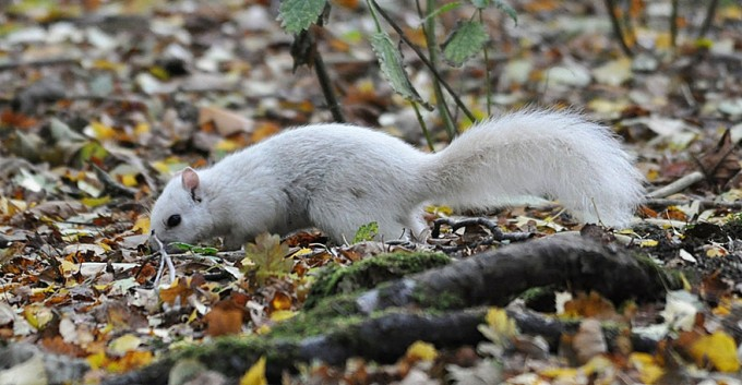 1027white_squirrel1