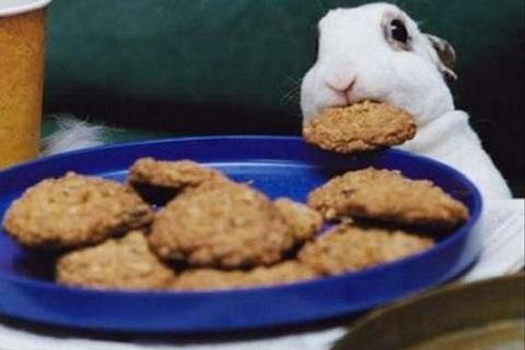 Pumpkin-Plus-pet-Bunny-Rabbit-Treat-rabbit-zone