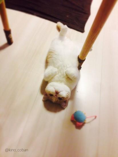 cat_yukadanbou1
