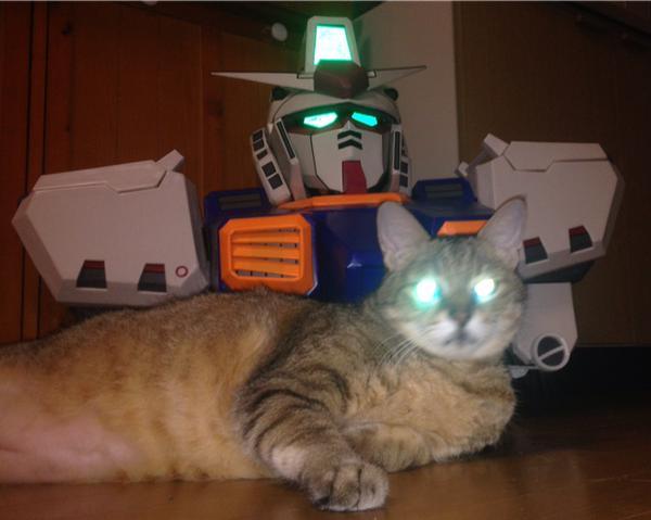 catlife (14)