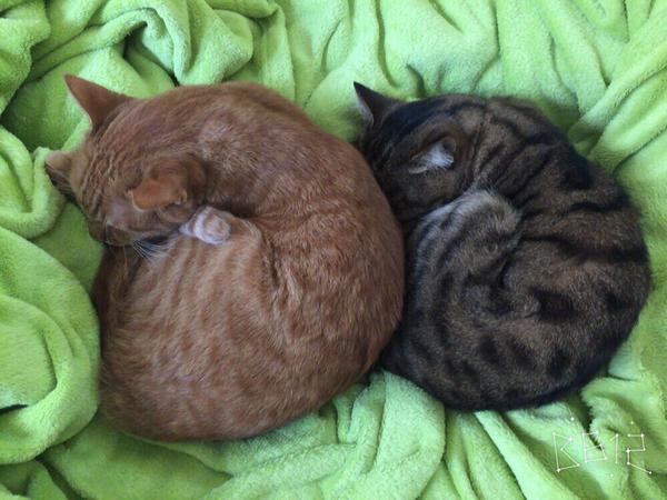 catlife (5)