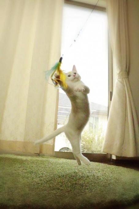catlife (7)
