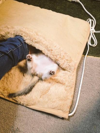 hotcat_sleep (1)