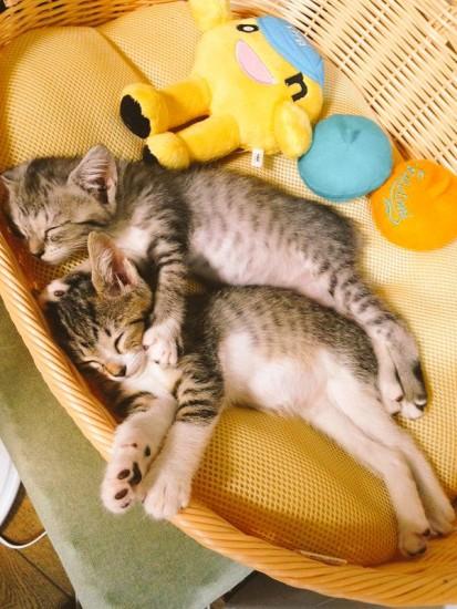 hotcat_sleep (6)