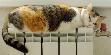 1107russian_cat4