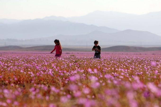 1115atacama_desert1