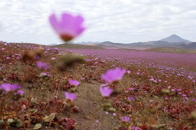1115atacama_desert2