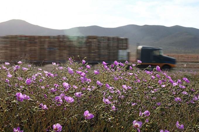 1115atacama_desert4