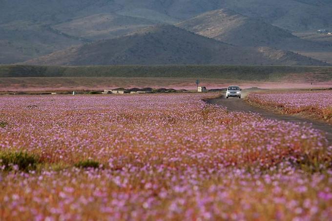 1115atacama_desert5