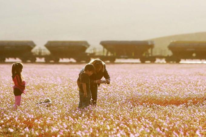 1115atacama_desert8