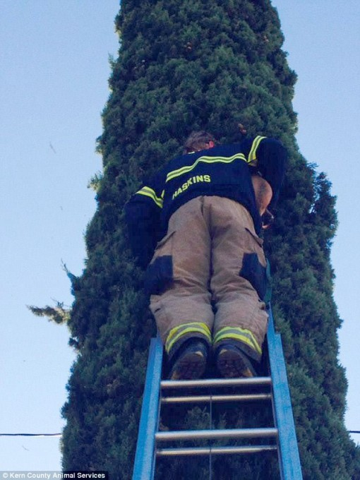 1118dog_tree3