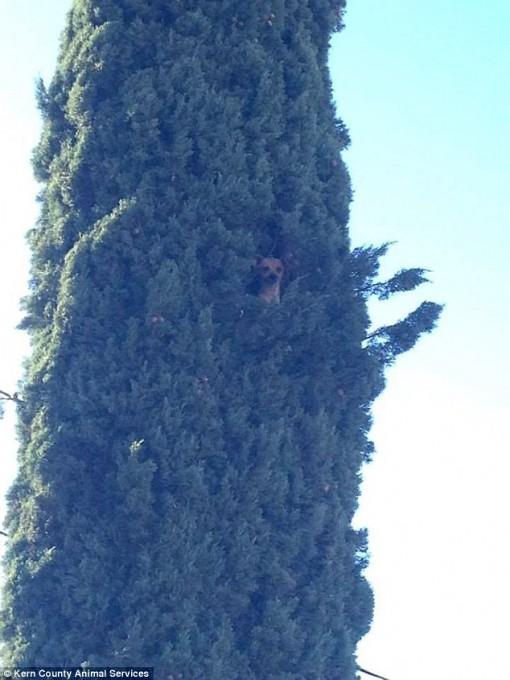 1118dog_tree4