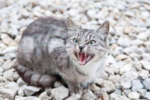 1127cat_aggressiveness4