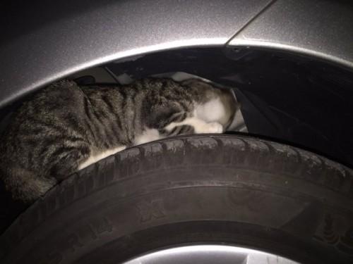 cat_car1