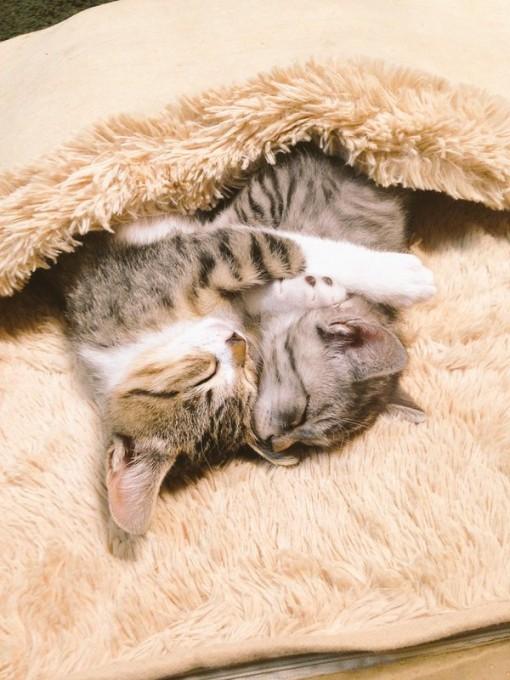 cat_hotcarpet4