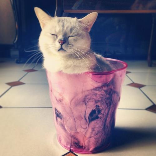 cat_liquid4
