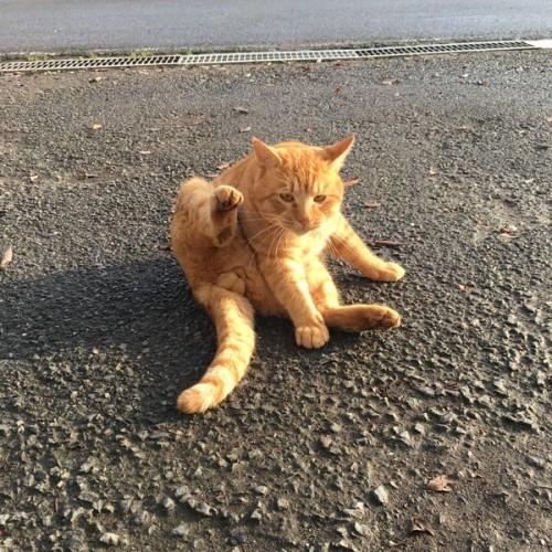 cat_magonote_3