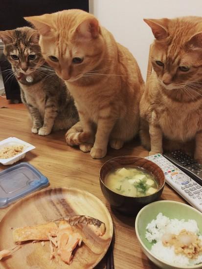 cat_sakana2