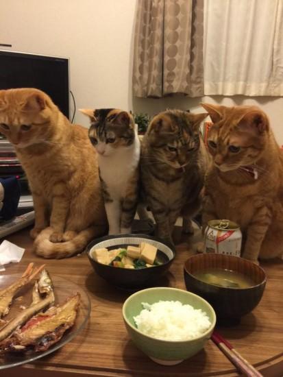 cat_sakana3